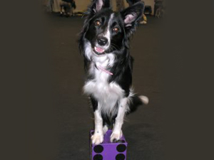 Dogs of Course Educational Events