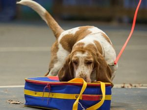 Dogs of Course Nosework Camps